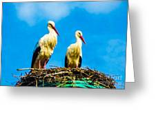 Two White Storks 16 Greeting Card