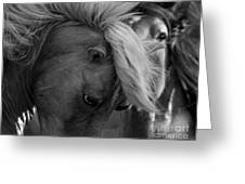 Two Wild Stallions Close Greeting Card