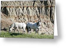 Two Wild White Stallions Greeting Card by Sabrina L Ryan