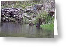 Two Working Beavers Greeting Card