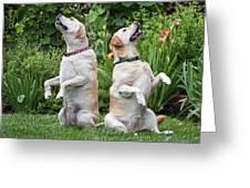 Two Yellow Labrador Retrievers Sitting Greeting Card