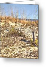 Tybee Island Dunes Greeting Card