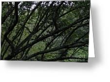 Tyler Tree 2 Greeting Card