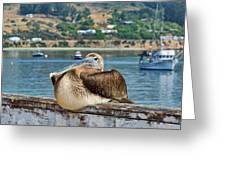 Tyler's Pelican Greeting Card
