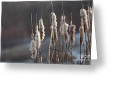 Typha Cattail Spikes Seeds Greeting Card