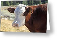 Typical Cattle Greeting Card