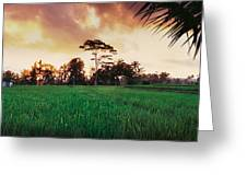 Ubud Rice Fields Greeting Card