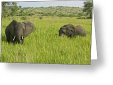 Ugandan Elephants Greeting Card