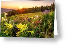 Uinta Wildflowers Greeting Card