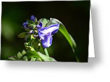 Ultra Violet Wildflower Greeting Card
