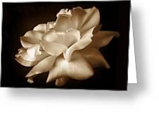 Umber Rose Floral Petals Greeting Card