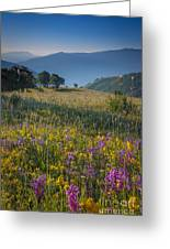 Umbria Wildflowers Greeting Card