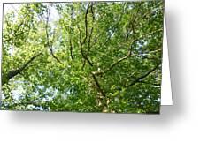 Under Leaf Canopy Greeting Card