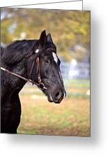 Under Rein Greeting Card