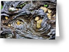 Under Roots Of Dead Tree Greeting Card by Linda Phelps