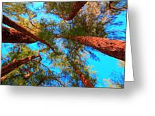 Under The Australian Pines Greeting Card