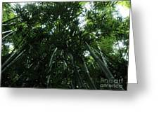 Under The Bamboo Haleakala National Park  Greeting Card