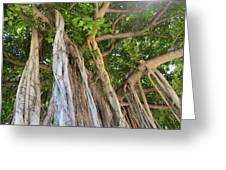 Under The Banyan Tree Greeting Card