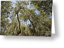 Under The Canopy - The Magical And Mysterious Trees Of The Los Osos Oak Reserve Greeting Card