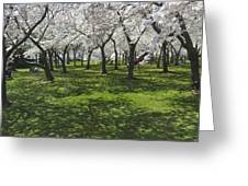 Under The Cherry Blossoms - Washington Dc. Greeting Card