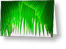 Under The Fan Palm Greeting Card