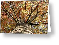 Under The Leaves Greeting Card