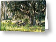 Under The Live Oak Tree Greeting Card