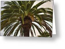 Under The Palm II Greeting Card