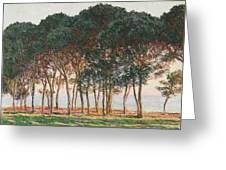 Under The Pines. Evening Greeting Card