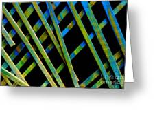 Under The Porch Greeting Card