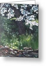 Under The Shade Of The Almond Blossom Greeting Card
