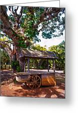 Under The Shadow Of The Tree. Eureka. Mauritius Greeting Card