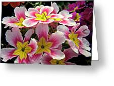 Under The Sunlight Greeting Card