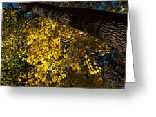 Under The Trees - Lambton Woods Toronto Canada Greeting Card