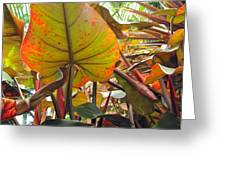 Under The Tropical Leaves Greeting Card