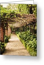 Under The Vine  Greeting Card