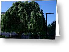 Under The Weeping Tree Greeting Card
