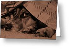Undercover Hound Greeting Card