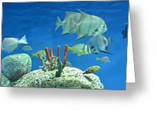 Underwater Beauty Greeting Card