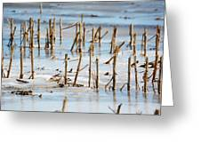 Underwater Cornfield Greeting Card