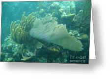 Underwater Forest Greeting Card by Adam Jewell