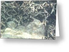 Underwater - Long Boat Tour - Phi Phi Island - 011340 Greeting Card