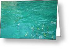 Underwater - Long Boat Tour - Phi Phi Island - 01136 Greeting Card by DC Photographer