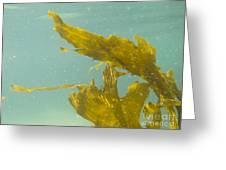 Underwater Shot Of Seaweed Plant Floating Leaves Greeting Card