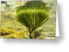 Underwater Shot Of Seaweed Plant Surface Reflected Greeting Card