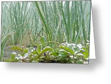 Underwater Shot Of Submerged Grass And Plants Greeting Card