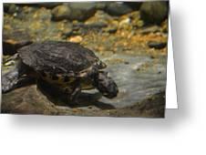 Underwater Turtle Greeting Card