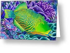 undulated trigger fish canvas print canvas art by carolyn steele