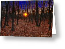 Unenchanted Forest Greeting Card