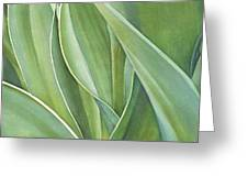 Unfolding Tulip Leaves Greeting Card